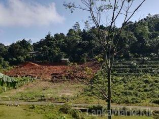 HORANA….. Usaviya Road.. URBAN FOREST