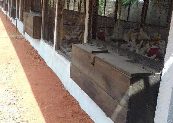 Layers farm for sale in Dambulla