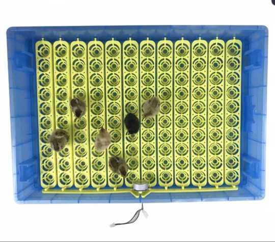 360 Egg incubator