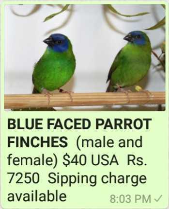 Finche's-Birds