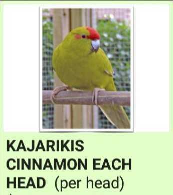 Kakariki's-Birds