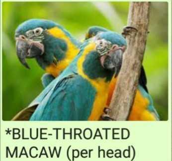 Macaw's Birds