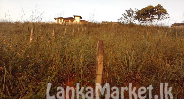10 PERCHES LAND WITH BEAUTIFUL SCENERY IN KANDY – PERADENIYA REGION.