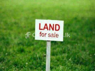 land in Anuradhapura