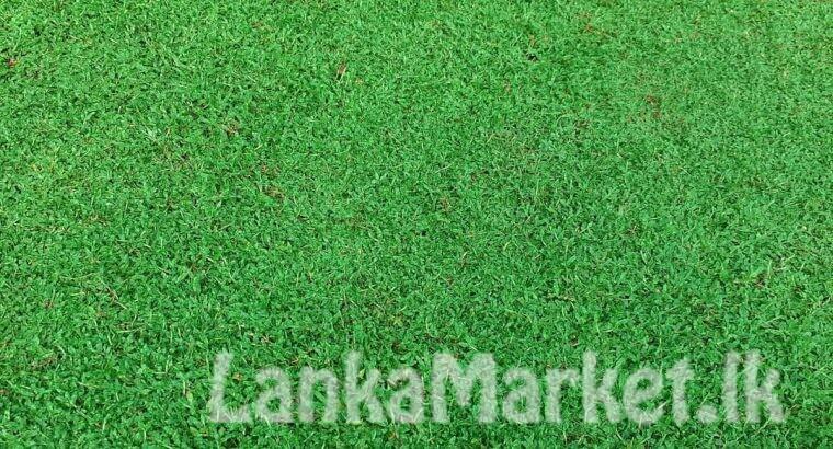 Landscaping service with Malasiyan carpet grass