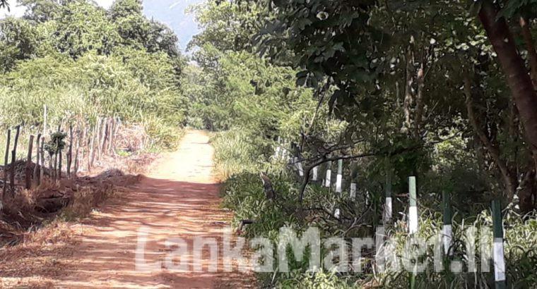 Land for sale Dambulla