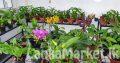Anturiam and croton plants